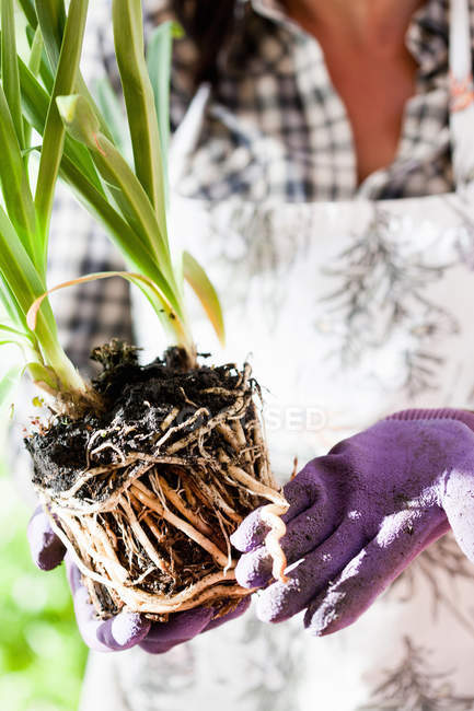 Woman holding plant with open roots outdoors — Stock Photo