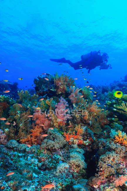Taucher schwimmen im Korallenriff — Stockfoto