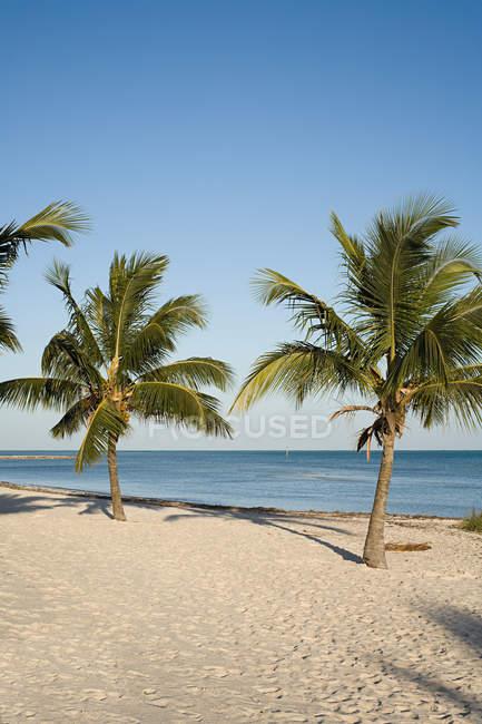 Идиллия пляж с пальмами — стоковое фото