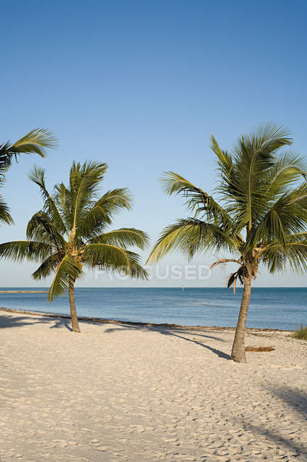 Idyllic beach with palm trees — Stock Photo