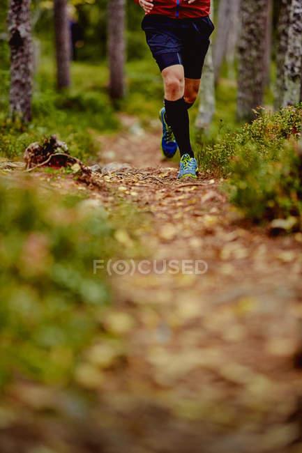 Человеческая тропа, бегущая по лесу, Анкитунтури, Остленд, Финляндия — стоковое фото