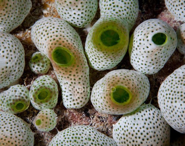Vue sous-marine des concombres de mer au fond de la mer — Photo de stock