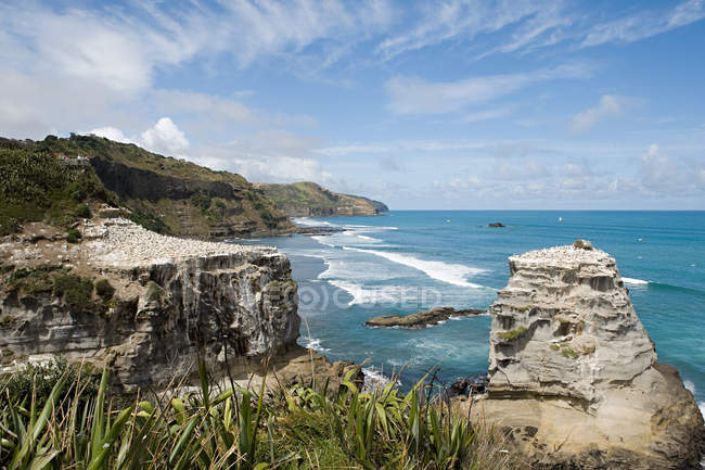 Coast with gannet rocks at Muriwai Beach — Stock Photo
