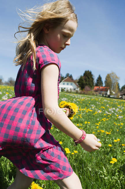 Girl picking wildflowers in field — Stock Photo