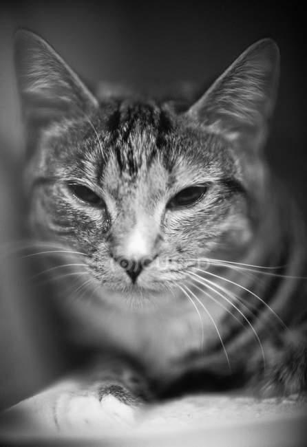 Portrait of sleepy cat — Stock Photo