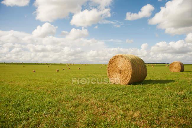 Balles de foin dans le domaine de la culture — Photo de stock