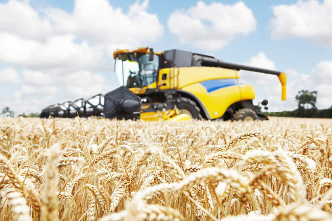 Mietitrice di lavorare nel campo del raccolto — Foto stock