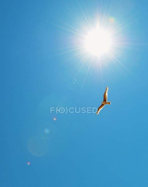 Bird flying in blue sky — Stock Photo