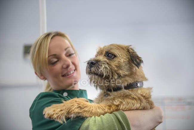 Ritratto di cane veterinario in chirurgia veterinaria — Foto stock