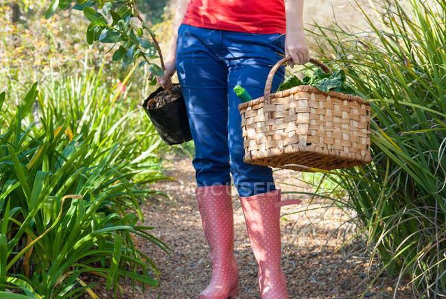 Обрезанное изображение женщины нося овощей и растений — стоковое фото