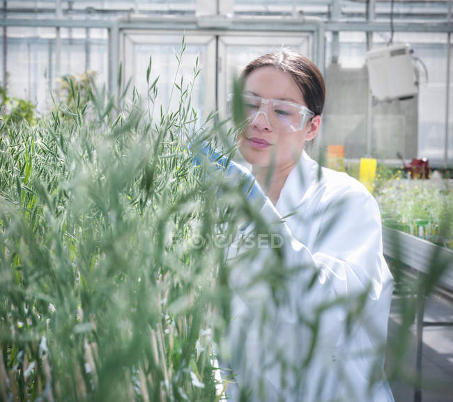 Scientist growing plants in nursery of biolab for structural analysis of DNA — Stock Photo