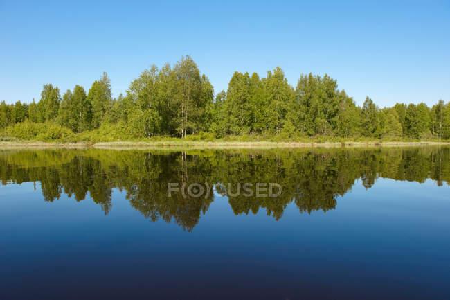 Árvores refletidas em lago imóvel — Fotografia de Stock