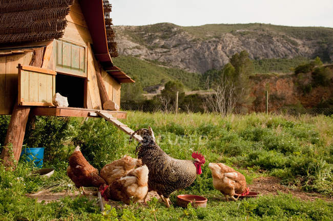 Chickens and hen house in farmyard — Stock Photo