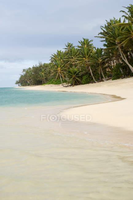 Пляжі з пальмами — стокове фото