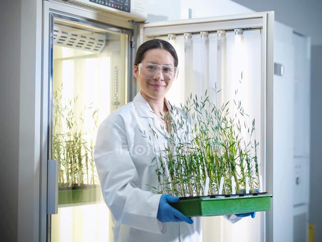 Portrait d'un scientifique tenant des cultures végétales cultivées en incubateur en biolab — Photo de stock