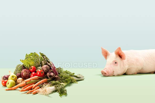 П'ятачок поблизу свіжих овочів — стокове фото