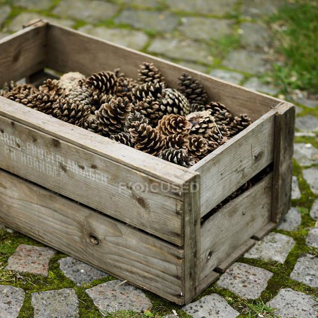 Jaula de conos de pino - foto de stock
