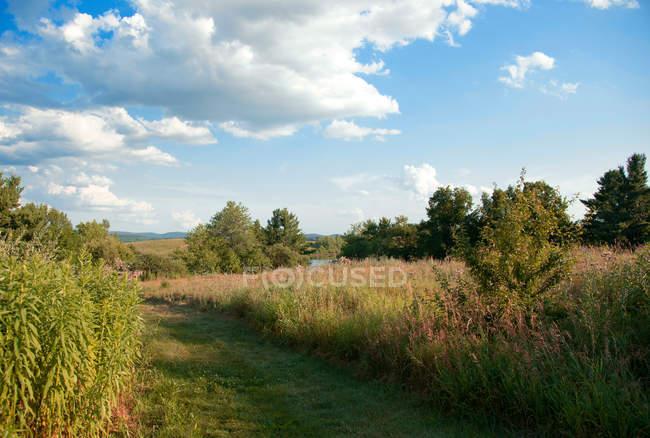 Scena rurale di estate prato — Foto stock