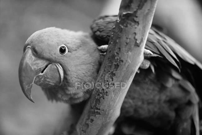 Vista de cerca del loro en la rama del árbol - foto de stock