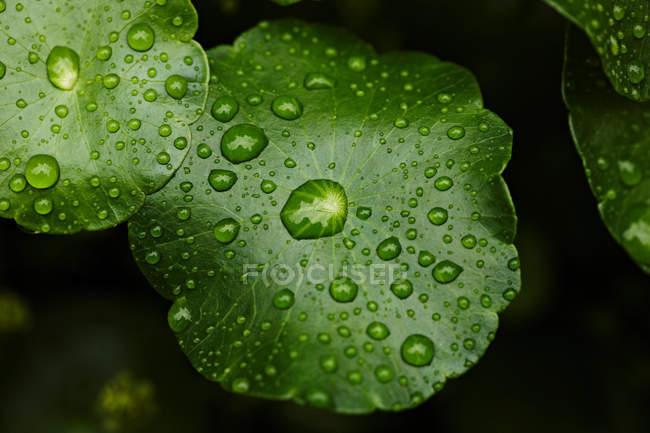 Краплини води на листі. — стокове фото