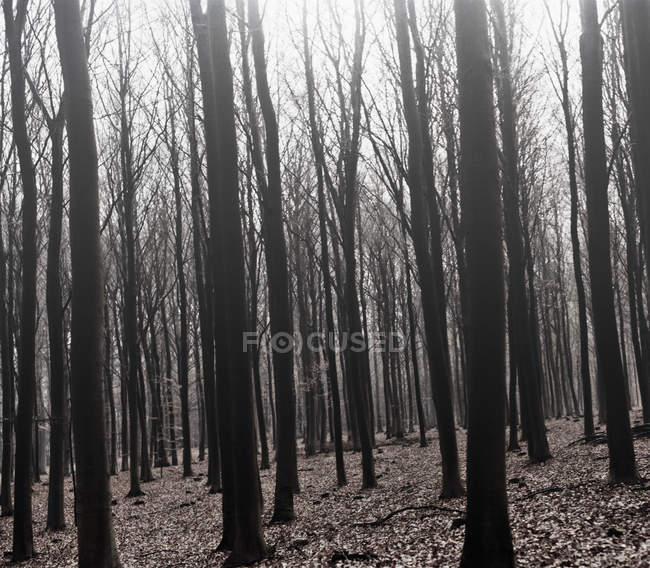 Alberi rari che crescono nella foresta — Foto stock