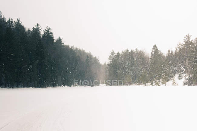 Trees and meadow in landscape — Stock Photo