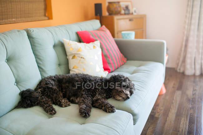Dog sleeping on sofa — Stock Photo