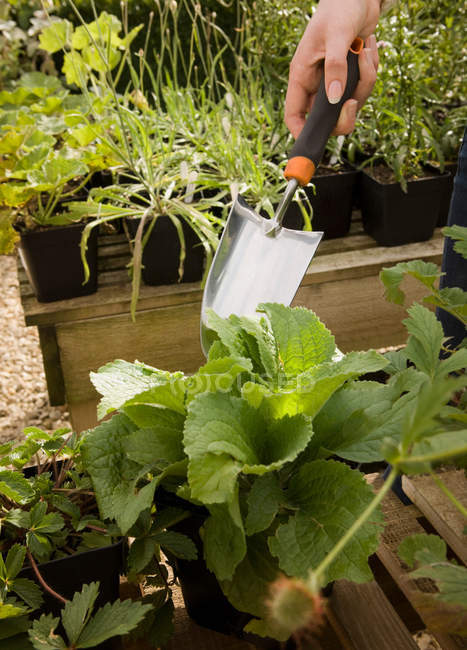 Cropped image of human hand holding trowel and plants — Stock Photo