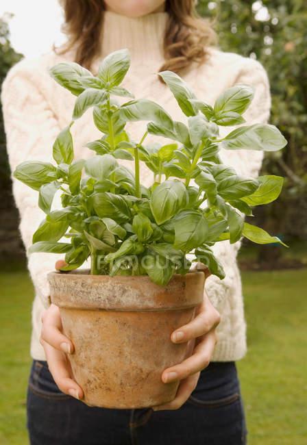 Женщина, держащая базилик растений — стоковое фото