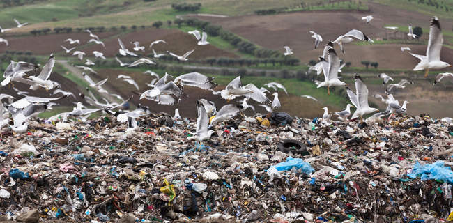 Birds circling garbage collection center — Stock Photo