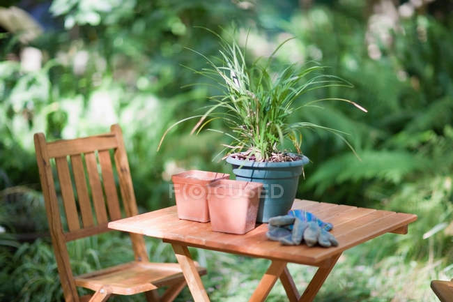 Potted plant with pots and gloves on table in backyard — Stock Photo