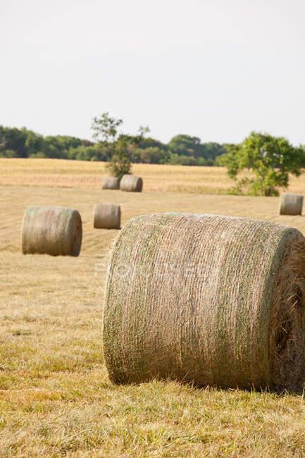Fardos de feno colocados no campo — Fotografia de Stock