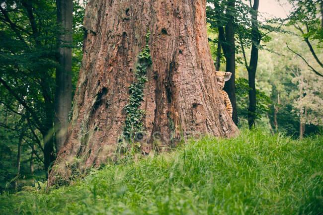 Хлопчик тигр носити костюм на відкритому повітрі — стокове фото