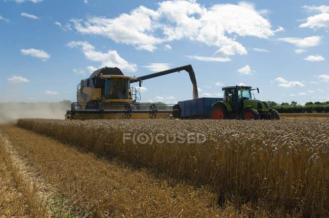 Трешер собирает пшеницу на поле — стоковое фото