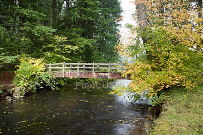 Ponte de madeira em quedas de prata — Fotografia de Stock