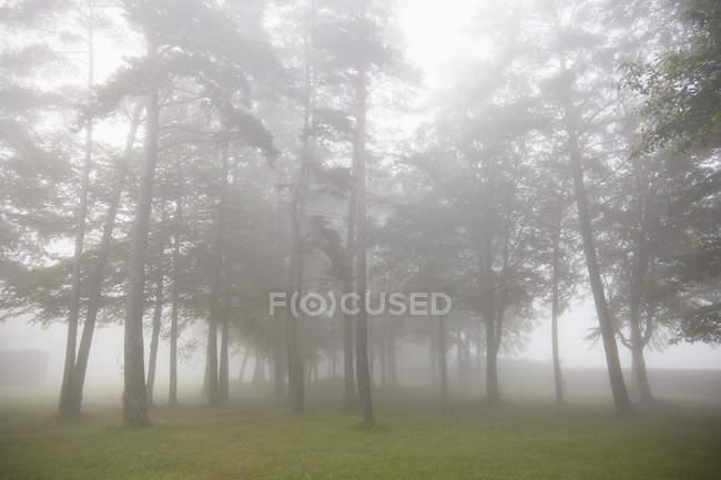 Árvores nebulosas na paisagem rural — Fotografia de Stock