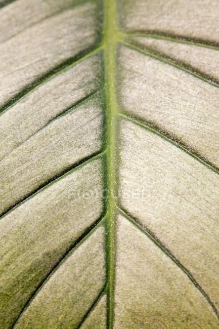 Close up pattern on a leaf — Stock Photo