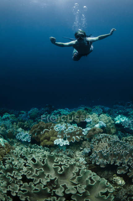 Snorkeler swimming in coral reef — Stock Photo