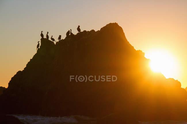 Siluetas de aves en roca en contraluz al atardecer - foto de stock