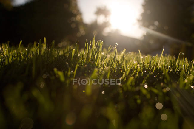 Vue de niveau de surface de l'herbe avec des rayons de soleil — Photo de stock