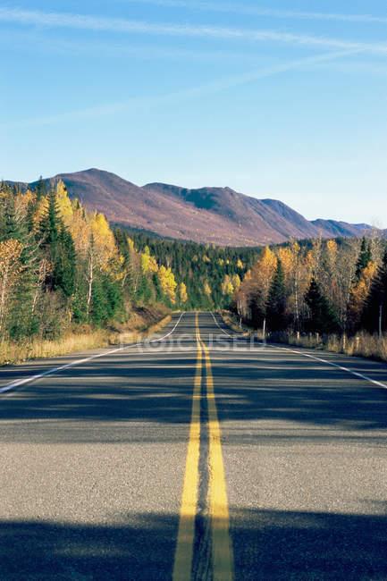 Deserted highway through trees — Stock Photo