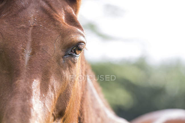 Close up shot of horse eye in sunlight — Stock Photo