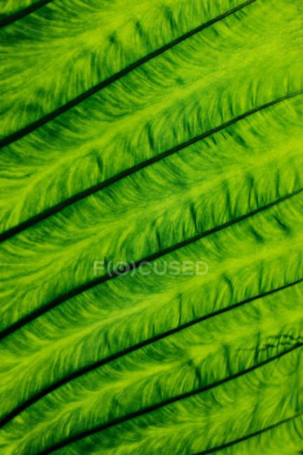 Вены подробно в листе — стоковое фото