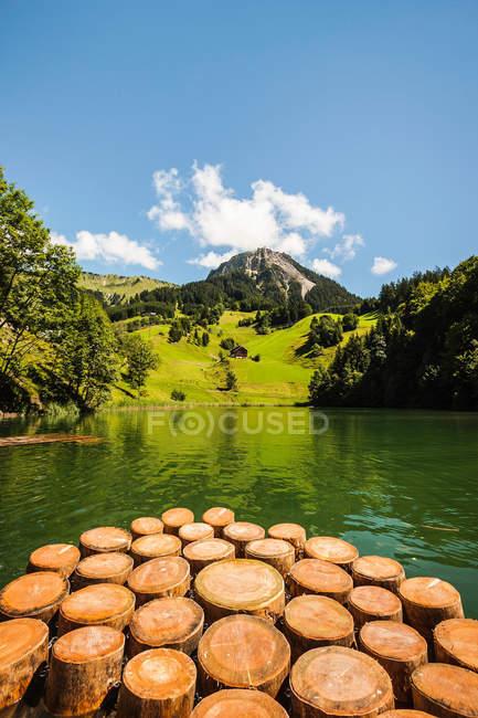 Пні в ще озеро — стокове фото