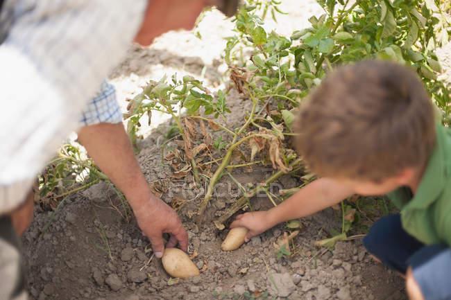 Uomo e nipote raccogliere verdure — Foto stock