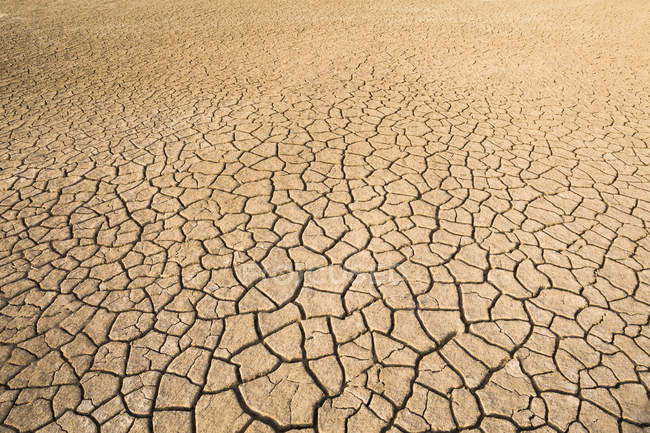 View of dried cracked mud texture in diminishing perspective — Stock Photo