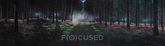 Dirt road in foggy forest — Stock Photo