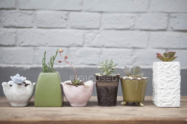 Six succulent plants in pots on table — Stock Photo