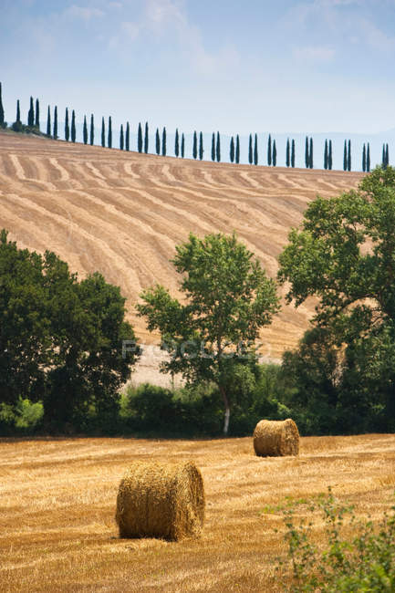 Fardos de feno no campo de cultivo — Fotografia de Stock