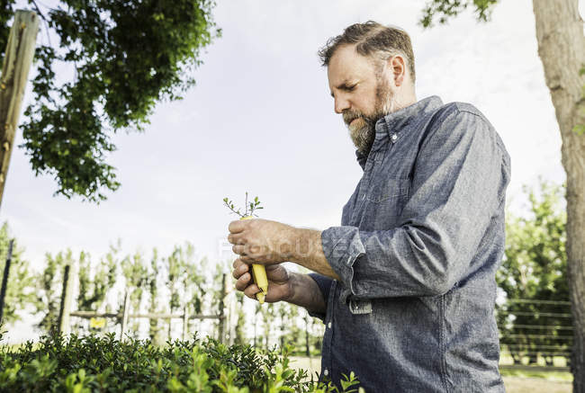 Scientist examining seedling at plant growth research centre — Stock Photo